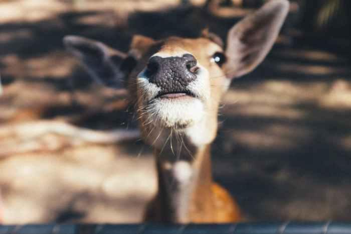 deer-ohdear